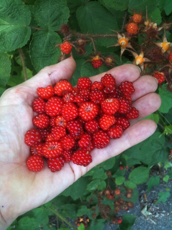 Raspberries from Fort Tryon Park